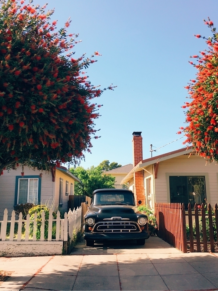 Full bloom - chevy, truck, picketfences - tramod | ello