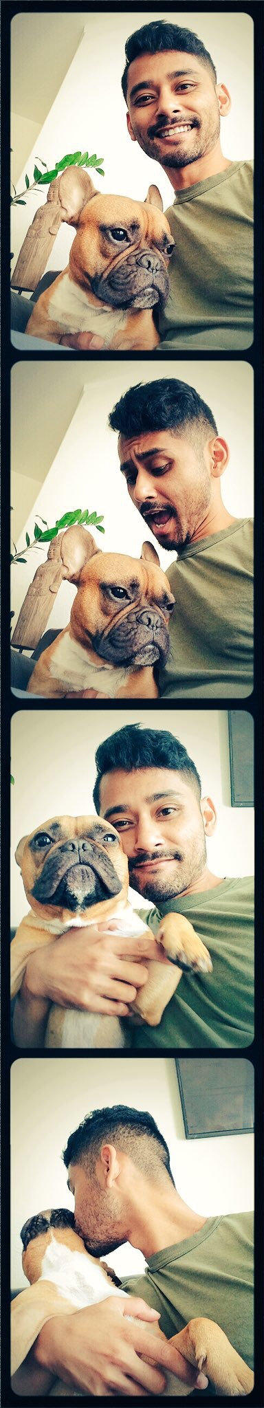 wanted picture - frenchbulldog - relax562 | ello