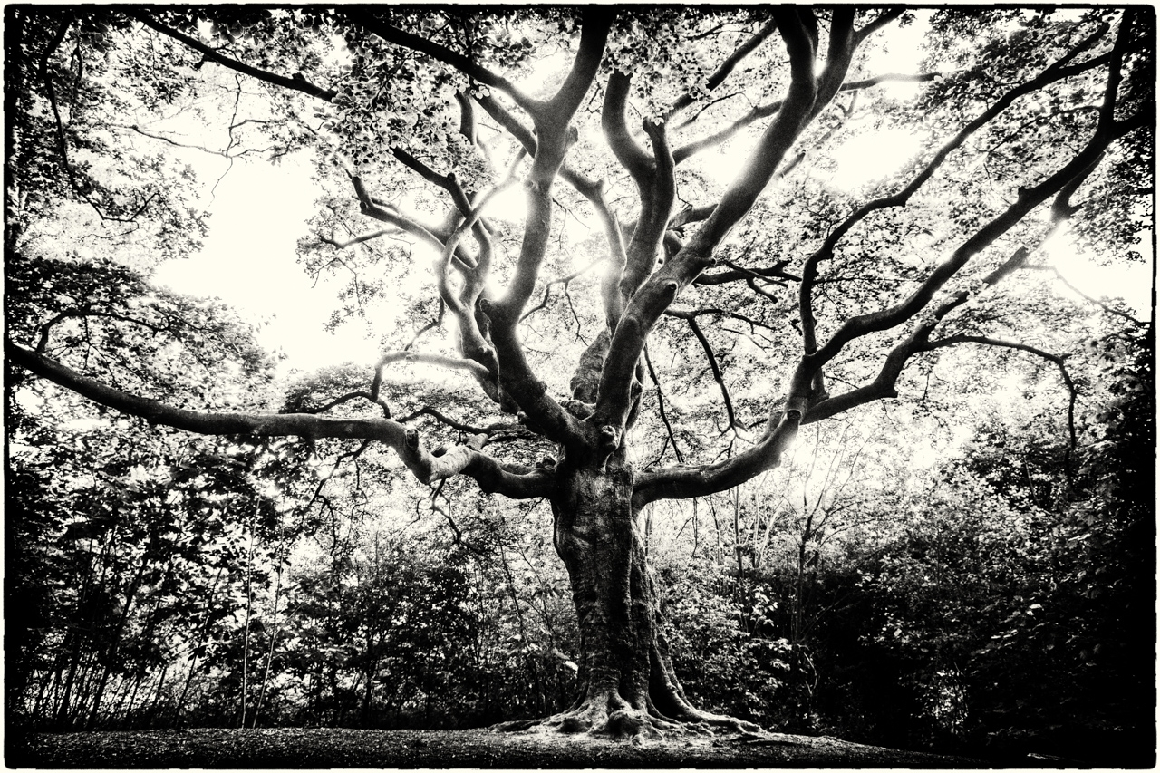 side Witch Tree - pvdhfotografie | ello