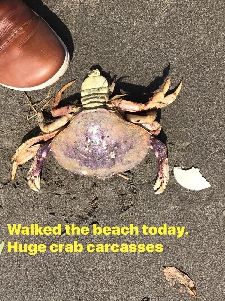 'Crab carcass - wuu - leapingbluehare | ello