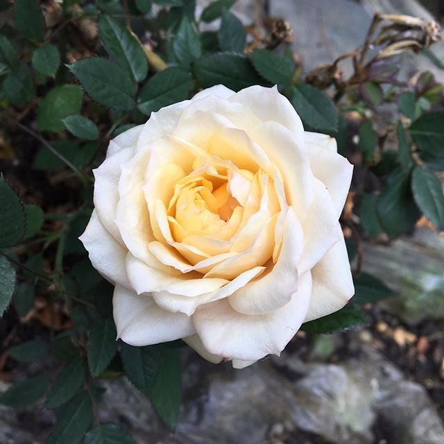told flower bloomed dark room t - unexpectedme | ello