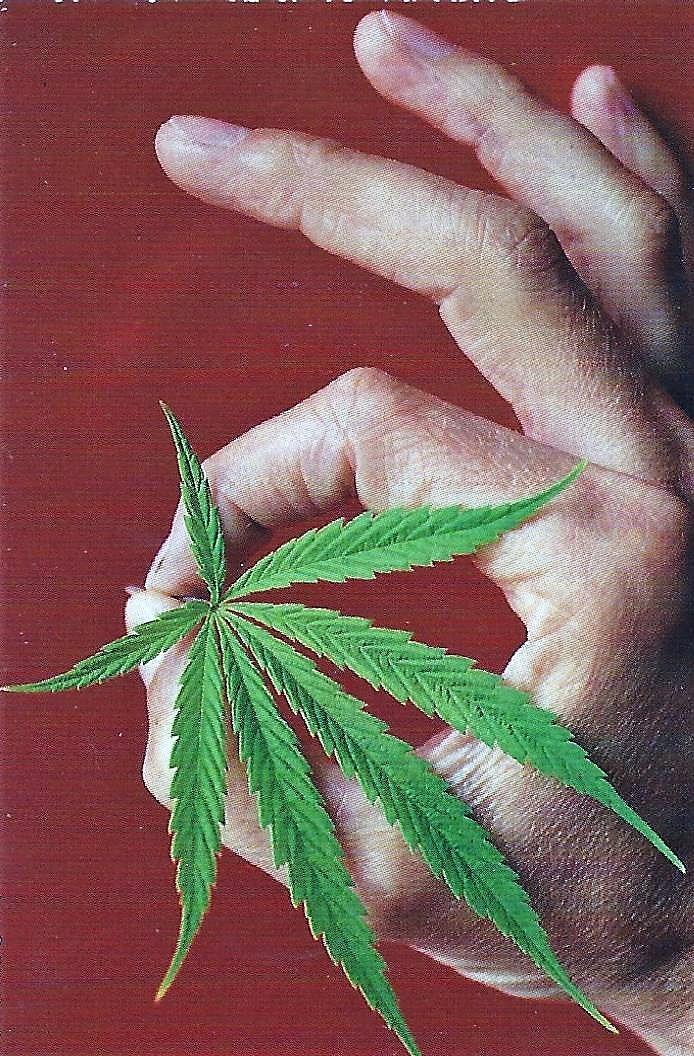 cannabis, ellocannabis, Hatun - ellocannabis   ello