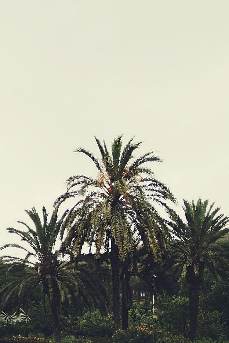 Barcelona, 50mm, botanic - fiveclothing | ello
