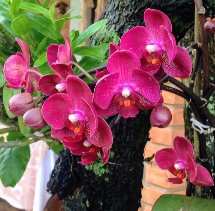 Orquídeas em chácara de Mairinq - antoniomg | ello