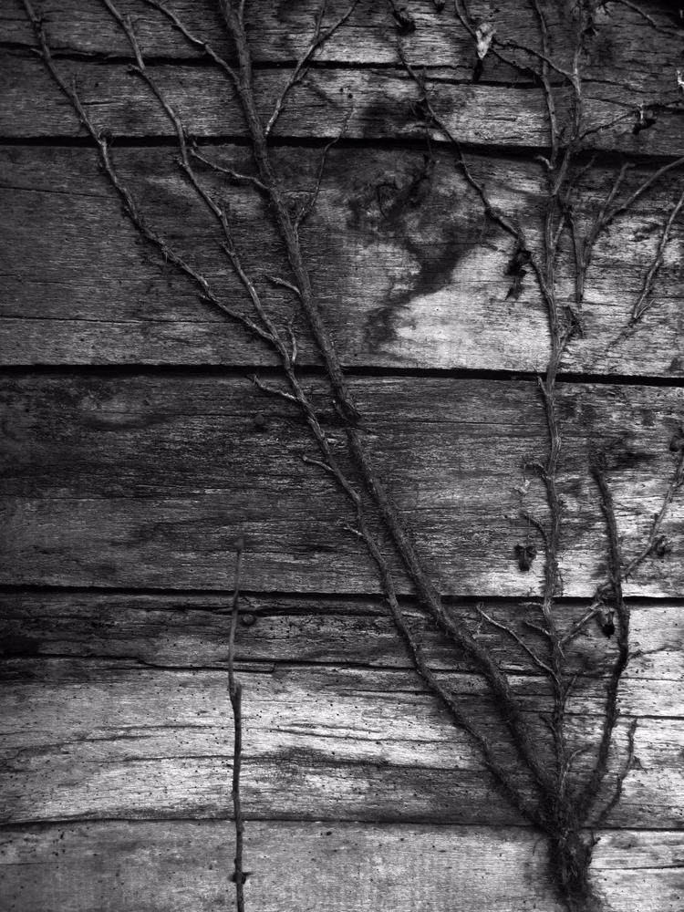 march 2017 - photography, nature - hemerocalys   ello