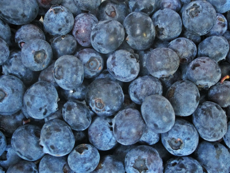 ✮ blueberry? Time year: June 20 - dekodex | ello