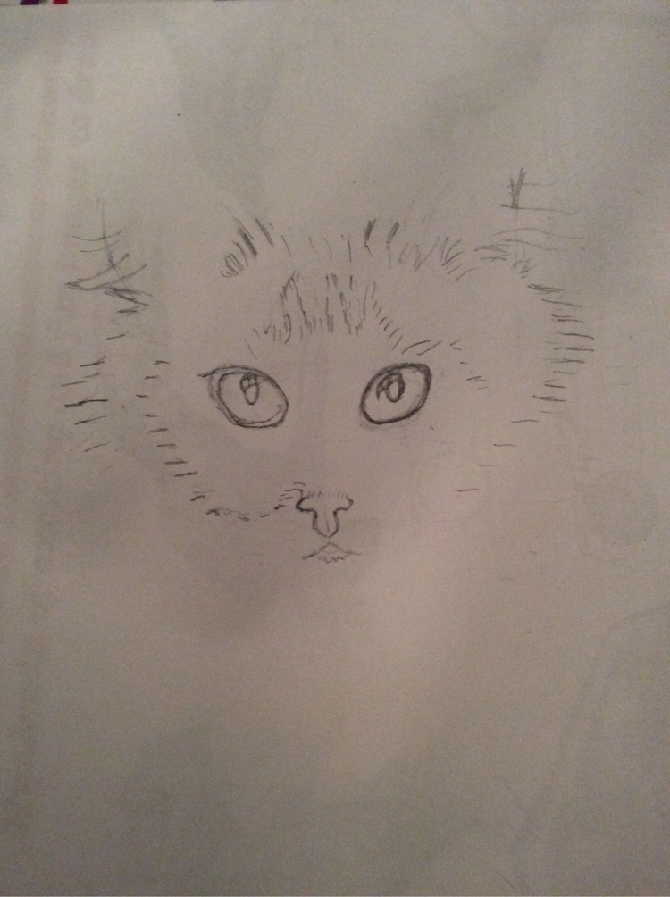realistic cat face colored penc - princesswho | ello