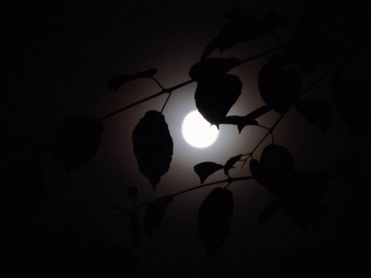 full moon leaves - photography, fullmoon - tobecooked | ello