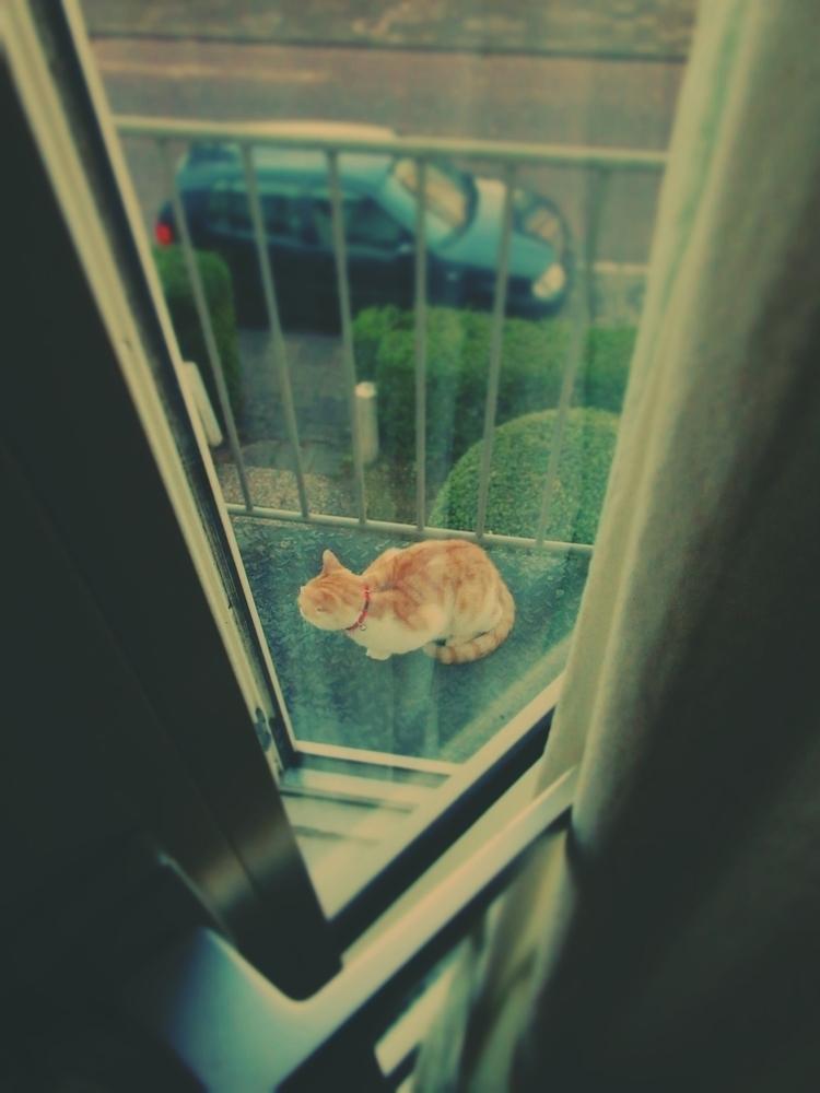 Pino Peeano - cat, cats, balcony - peeano | ello