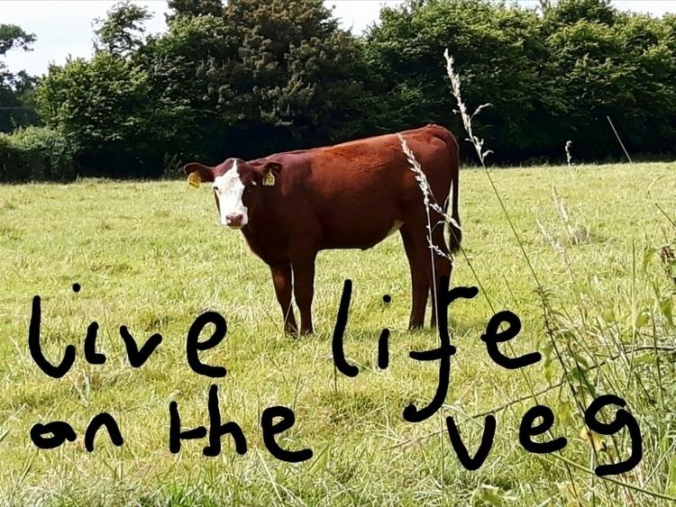 vegan - inmynextlife | ello