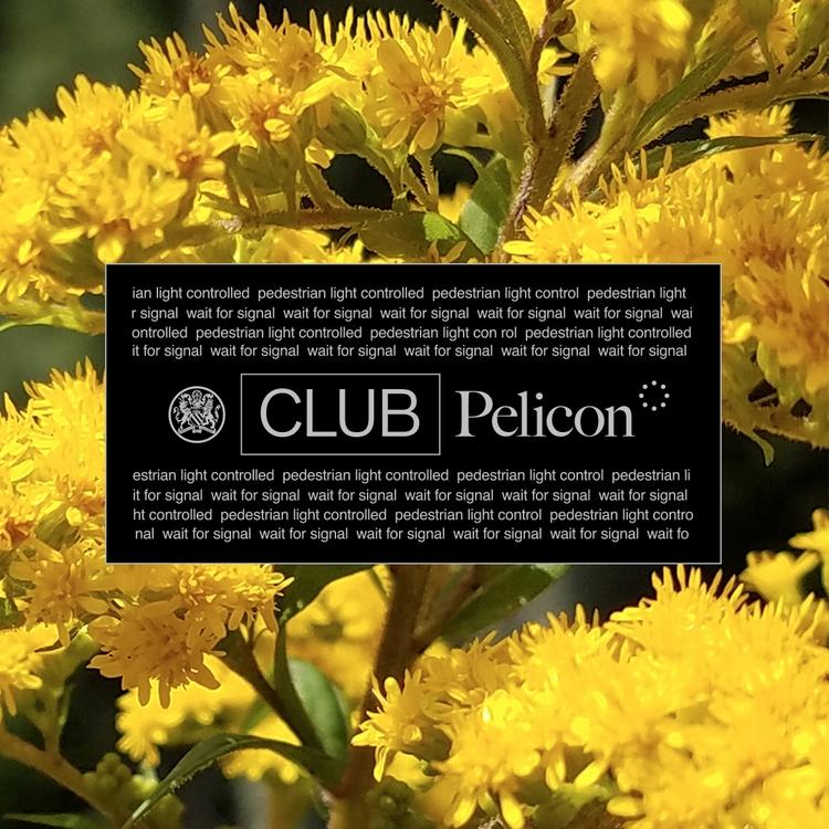CLUB Pelicon - clubpelicon | ello