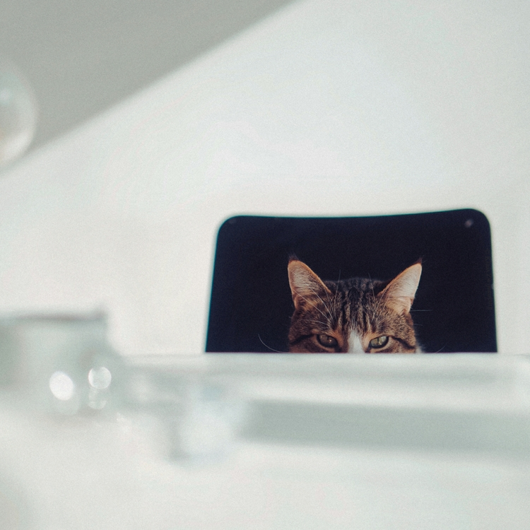 Uninvited persistent guest, 201 - klaasphoto   ello
