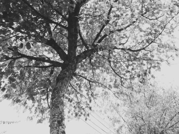 Nature, sky - cheiladbarros | ello