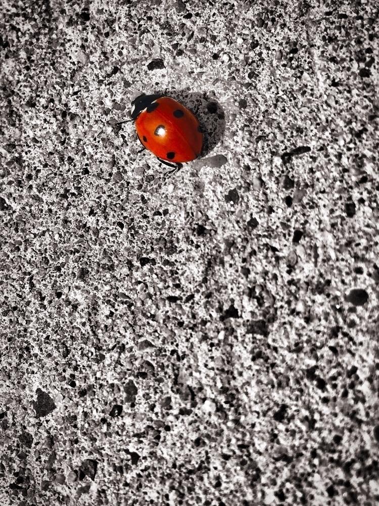 ladybug, blackwhite, splashofcolour - wscottlaw   ello