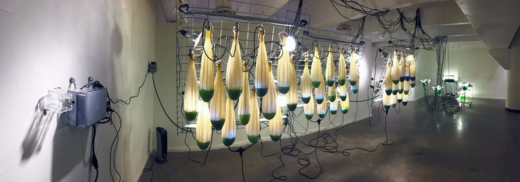 Alison Hiltner - art, humans, algae - valosalo | ello