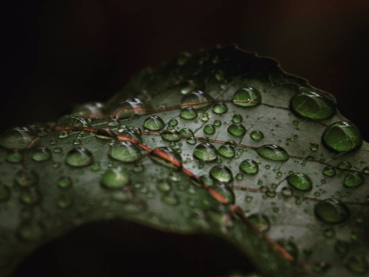 Drops - rain, macro, photography - athulnair | ello
