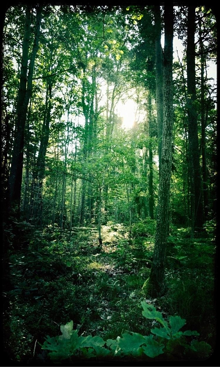 Meditation:green_heart - yogiwod | ello