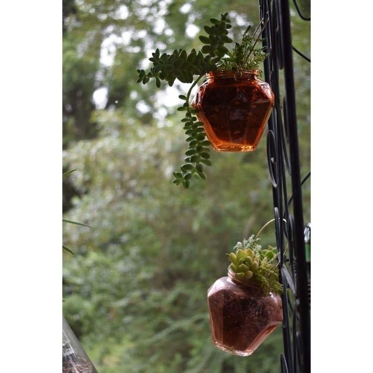 hanging arrangements letting gr - succsbyles | ello