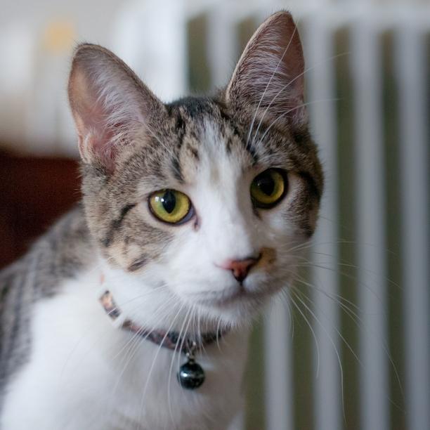 COMMENT SHARE Meet: Athena, Spa - snapcats   ello