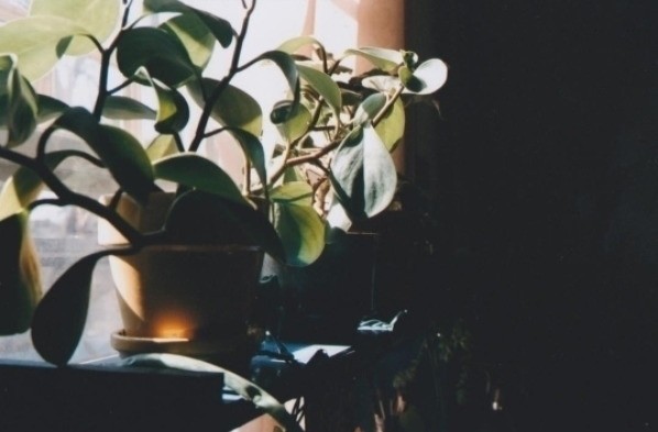 catch plants taught sober Photo - wimpyaf   ello