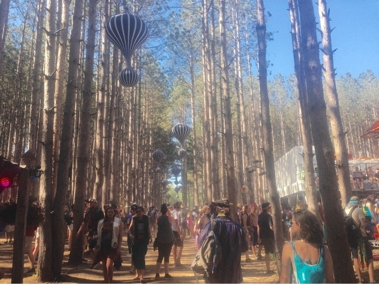wait forest short weeks - ElectricForest - callan_c | ello