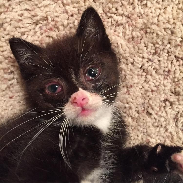 Foster Kittens 2017 Domino, Gin - nagnagnag | ello