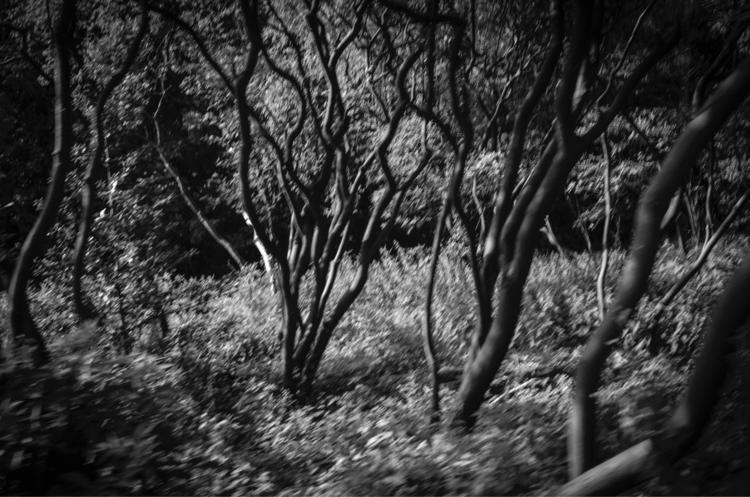 Untitled, Woods - tree, trees, woods - petarmilic   ello
