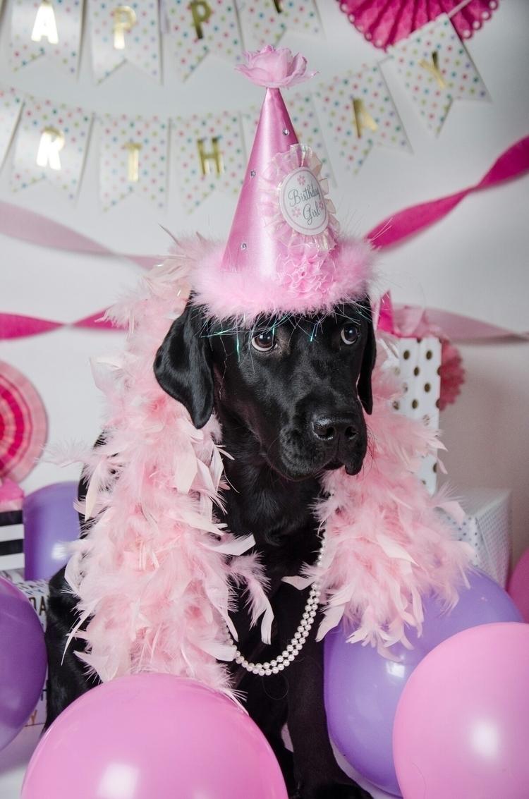 Gabriella IV, CCI pup training - antonellisphotography | ello