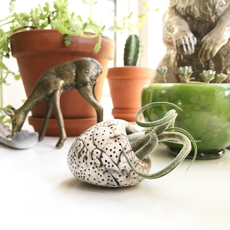 Pottery. Plants. Blown glass. f - highyieldstudio | ello