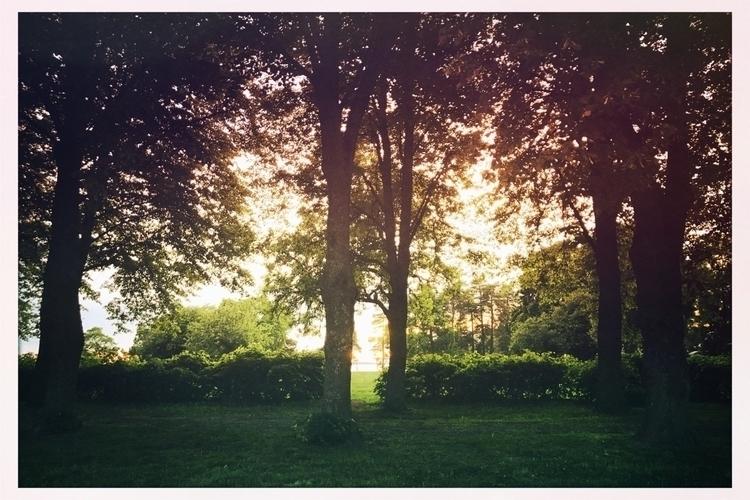 park, green, trees, sea, walk - yogiwod | ello