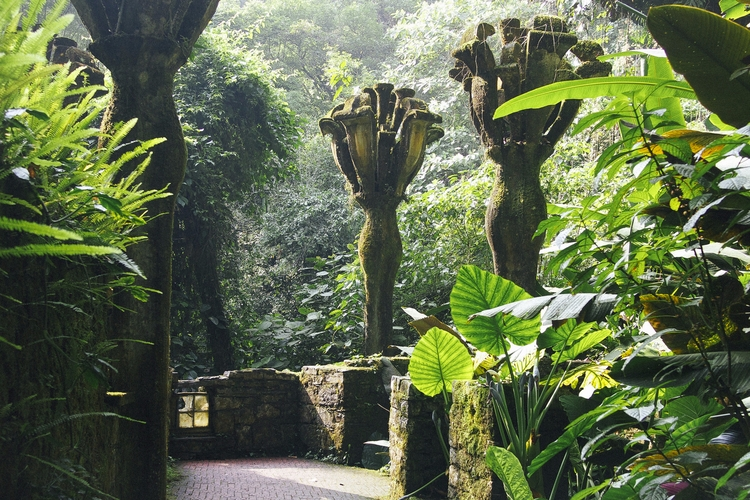Deep Mexican Jungle, Man Create - valosalo | ello