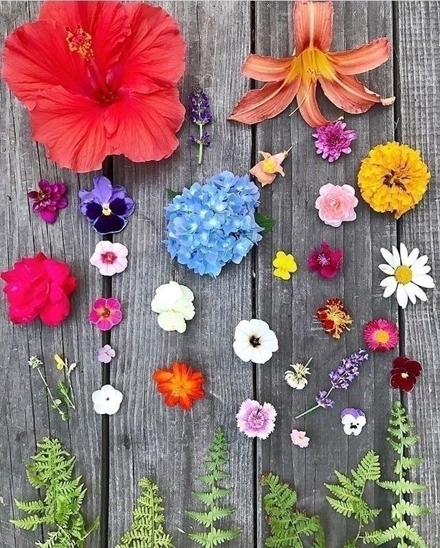 Reblog - nature, life - kinddesignsonline | ello