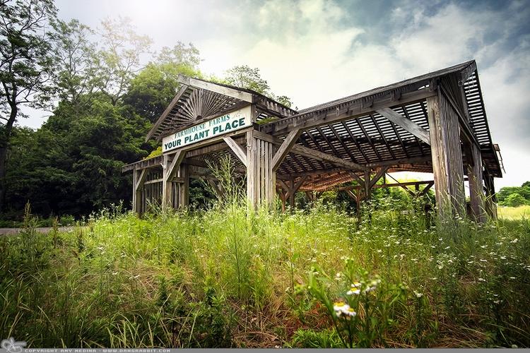 Plant Place Abandoned overgrown - dangrabbit-photography | ello