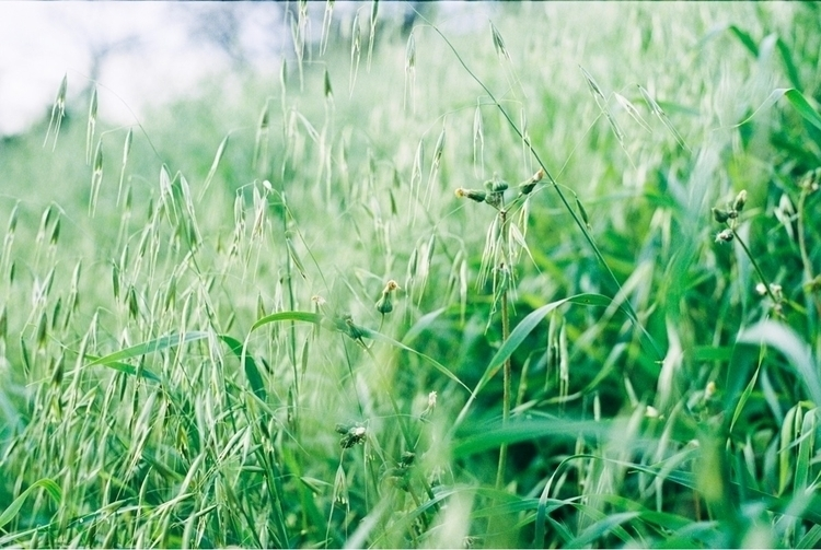 shootfilm, film, 35mm, filmisnotdead - brianne-siegel | ello