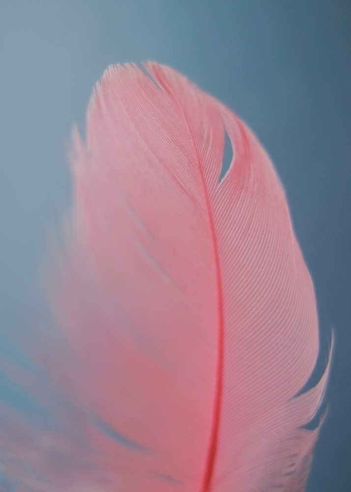Coral feather Flickr / Tumblr I - andreigrigorev | ello