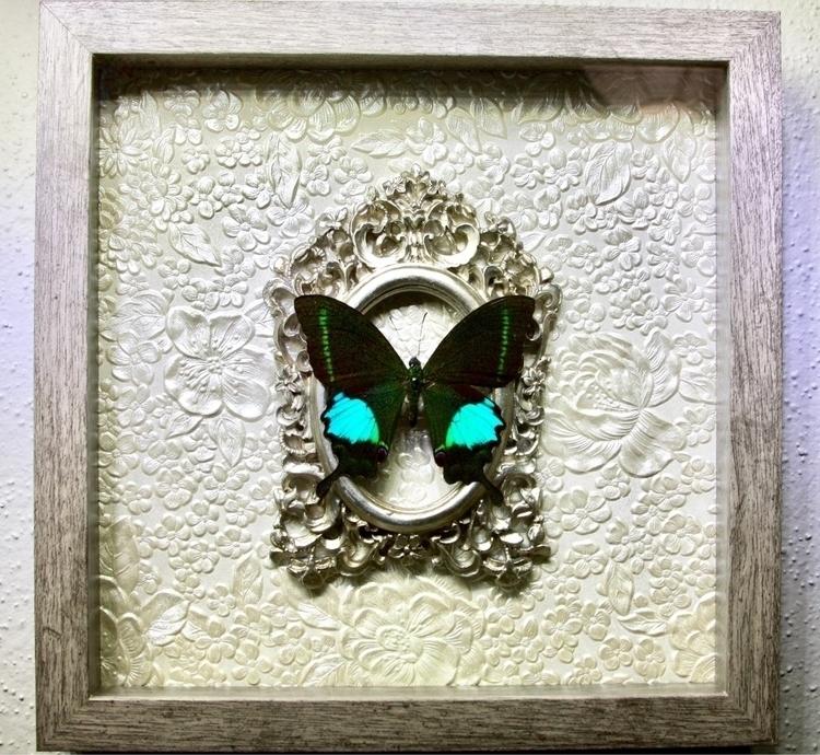 Paris Peacock Swallowtail butte - buginthebox | ello