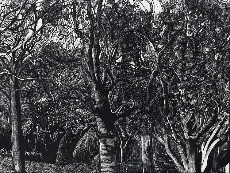 Dark Forest, 9x12 scratchboard - jtiedemann | ello