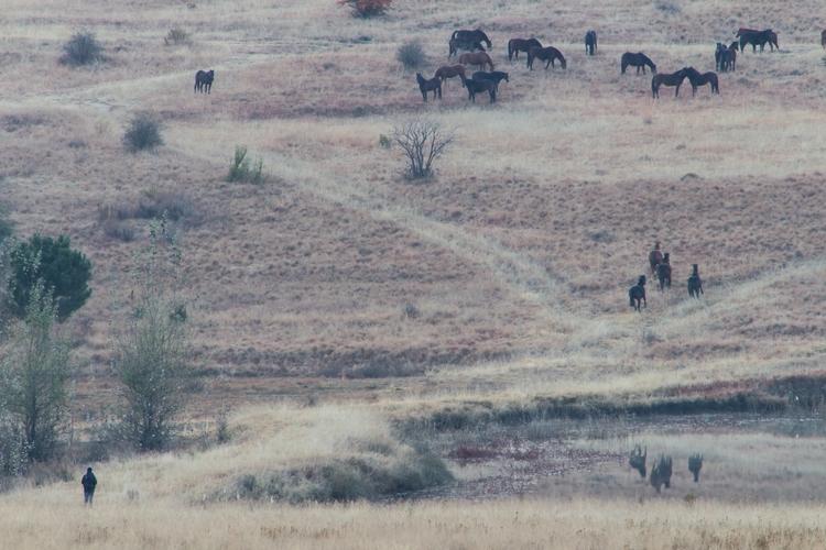 Human horses western border Les - genevievemaynard | ello