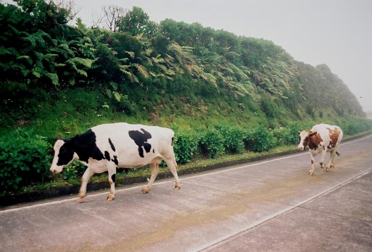 Açores, 2017, 35mm - sebastiao_varela | ello