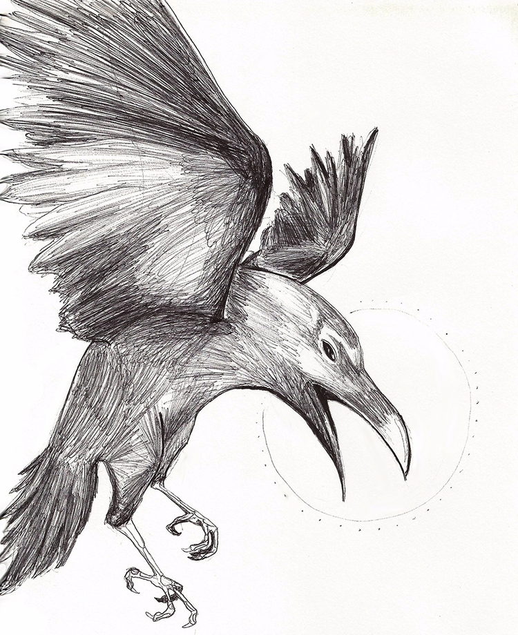illustration, pen, raven, tattoo - lewm | ello