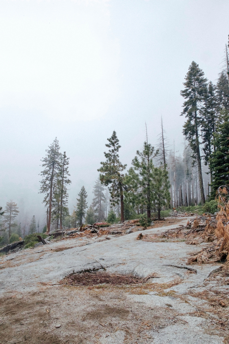 Sequoia National Park | Califor - toriamia | ello