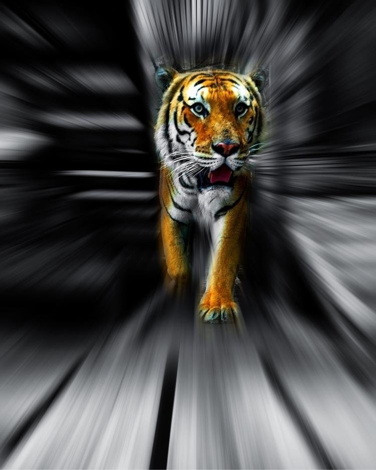 move, photography, wildlife, tiger - peri_maza   ello