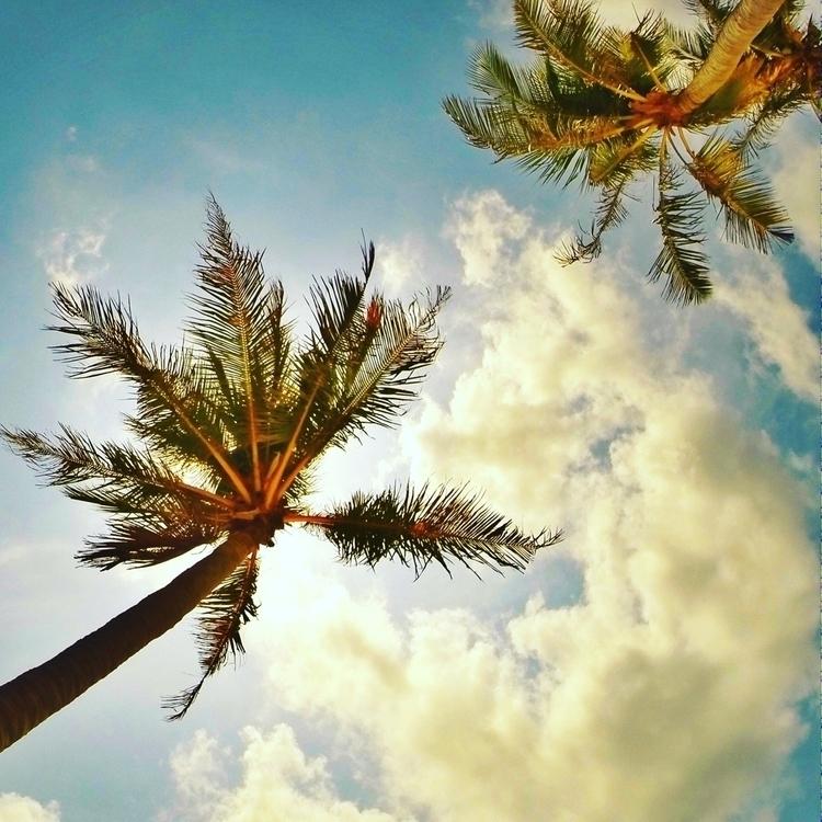shadow - beach, palmtrees, travel - jonas_gio   ello