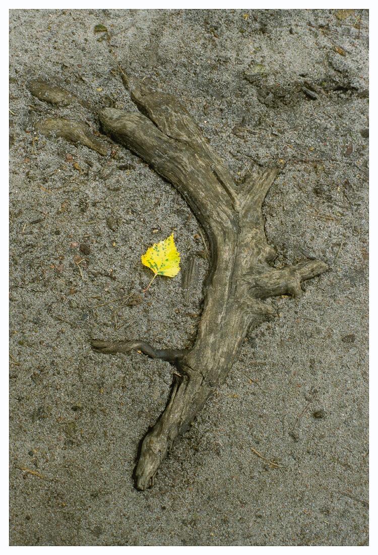 life— remains? night ~ Masaoka  - homosporocarpus   ello