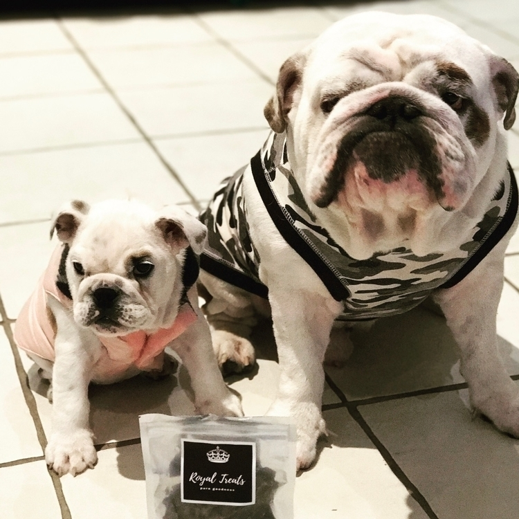 Love - bulldog, Britishbulldog, puppy - royalbulli3z | ello