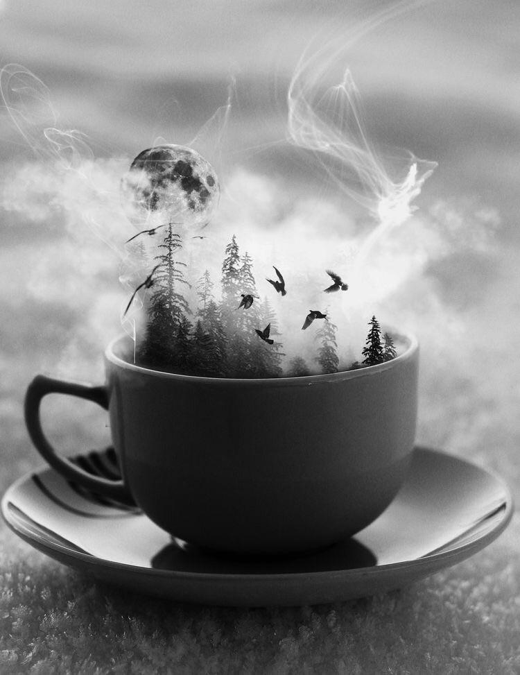 moonVibes, tea, trees, ravens - elementalvibes | ello