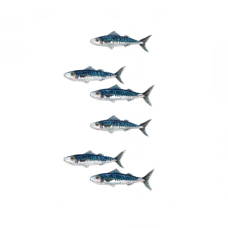 watercolour, design, fish, nautical - aliellydesign | ello