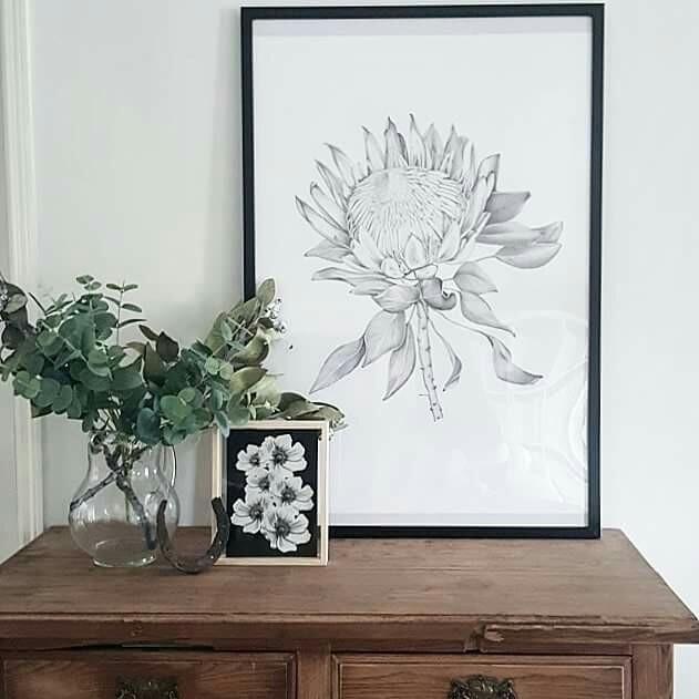 Protea illustration printed A1 - paperandstyleco | ello