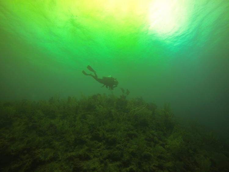 Diving coast Island Utila heavy - locart | ello