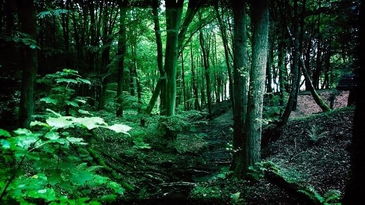 rainy day, walk trees - tree, rain - yogiwod | ello
